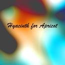 Hyacinth for Apricot/Curcuma Let