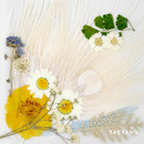 WHITE NIGHT -KR EDITION-/SOL (from BIGBANG)