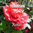 ローズ/テラサン