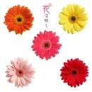 花は咲く/NHK交響楽団/東京佼成ウインドオーケストラ/他