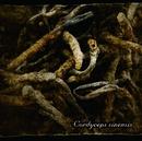 Cordyceps sinensis/Lycaon