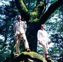 見上げるほどの大木に/アルケミスト