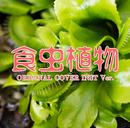 食虫植物 ORIGINAL COVER INST Ver./NIYARI計画