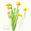 CIRCUIT/Daffodil-19