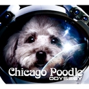 ODYSSEY/Chicago Poodle