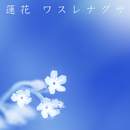 ワスレナグサ/蓮花