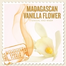 SCENTS OF THE WORLD~MADAGASCAN VANILLA FLOWER/Nature Notes