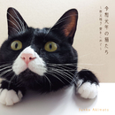 令和元年の猫たち ~秋元順子  愛をこめて~/秋元順子