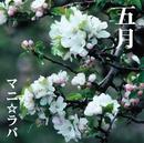 五月/マニ☆ラバ