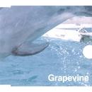風待ち/GRAPEVINE