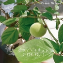 ピアノ・ナチュレ J-POP VOL.1/ピアノ・ナチュレ