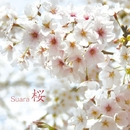桜/Suara