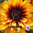 Sound of KYOTO~すきま~/COLONA/Varis