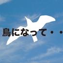 鳥になって・・/MIKAKO