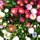 Sound of KYOTO -すきま- / ウキウキパラダイス -ウクレレ・サウンド集-/原公一郎