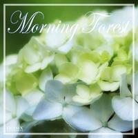 モーニング・フォレスト ~爽やかな朝の目覚め~