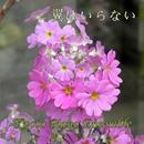 翼はいらない inst version/Kyoto Piano Ensemble