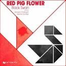 Black Swan/Red Pig Flower