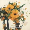 やすらぎのクラシック リフレッシュのための名曲集/2001・ストリングス・オーケストラ