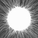 Mononucleosis/Drop-E