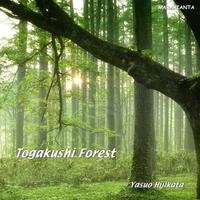 Togakushi Forest 戸隠の森 (PCM96KHz/24bit)
