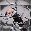 Toucan/Limetone