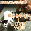 伝えられないI love you/和泉ねこねこねこね子