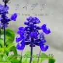 アイデア(「半分、青い。」より) inst version/Kyoto Piano Ensemble