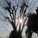 Sunbathe(Remastered)/西中島きなこ