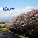 桜の木 feat.kokone/澤山 晋太郎