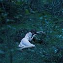 眠りの森/Aimer