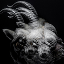 BEAUTIFUL DEFORMITY/the GazettE