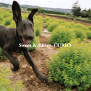 Sweet & Bitter/CURIO