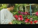 Volver A Empezar(Video)/Alejandro Lerner