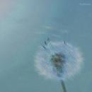 b-flower/b-flower