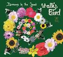Blossoms In The Street (E-Radio Edit)/Wallis Bird