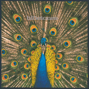 Expecting To Fly/The Bluetones