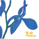 青い花/姫神