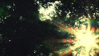 桜流し(VIDEO)/宇多田ヒカル