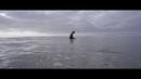 Only The Ocean/Jack Johnson