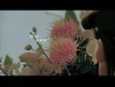 Tai Tun (Music Video)/Kelly Chen