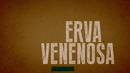 Erva Venenosa (Lyric Video)/Valentina Francisco