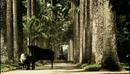 Chega De Saudade/Milton Nascimento & Jobim Trio