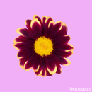 Wallflowers/The Chain Gang Of 1974