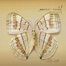 White Moth/Xavier Rudd