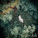 Ark/天月-あまつき-