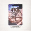 Joshua Tree Park/Joshua