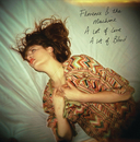 Dog Days Are Over (International Digital Maxi-Single)/Florence + The Machine
