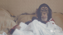 No More Michael Jackson/Teddybears