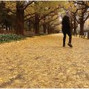 或る秋の日/佐野 元春